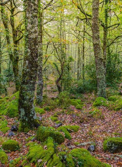Etiqueta para Manejo Florestal e Reflorestamento
